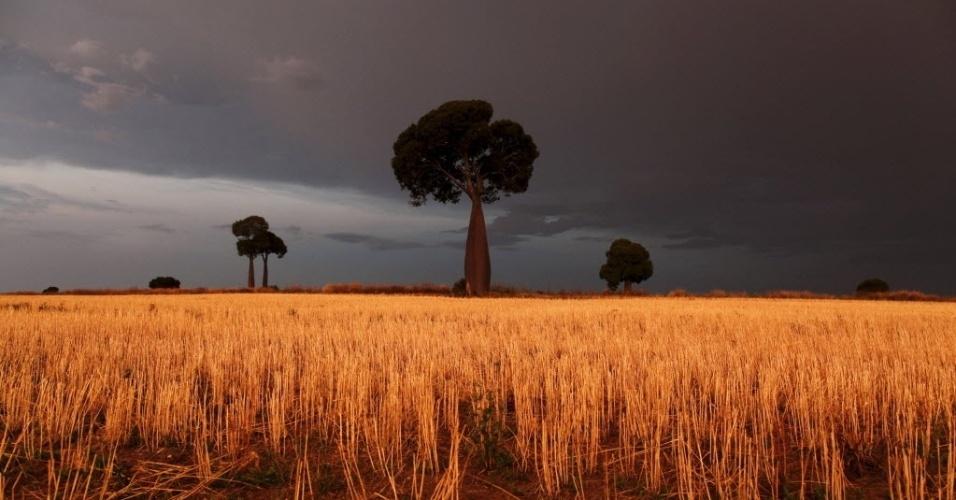 9.fev.2016 - Trigo ilumina a paisagem em meio a nuvens de tempestade em uma propriedade agrícola ao oeste de Brisbane, na Austrália