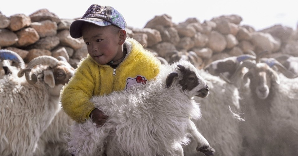 8.mai.2016 - Menino pastor de ovelhas segura cordeiro à beira do lago Namtso, na região autônoma do Tibet, na China. A maior parte dos carneiros de mais de 5 meses de idade são castrados e criados em meio às ovelhas. O manejo garantiria maior qualidade na criação de ovinos