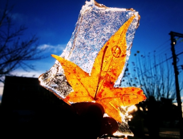 10.jun.2016 - A cidade de São Joaquim, na serra catarinense, registrou frio de -5,5ºC. O lago da praça João Ribeiro e algumas árvores ficaram congeladas, prendendo algumas folhas no gelo