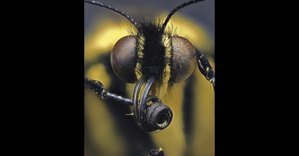 Esta foto de uma borboleta feita por Daniel Saftner 'foi escolhida pois mostra claramente as partes da boca e os olhos de uma borboleta com muitos detalhes', disse Eric Hilaire, um dos juízes e editor  de ciência, ambiente e desenvolvimento global do jornal 'Guardian'