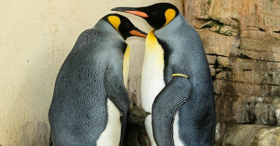 22.set.2016 - Dois pinguins-imperadores protegem filhote em clausura do zoológico de Schoenbrunn, em Viena, na Áustria