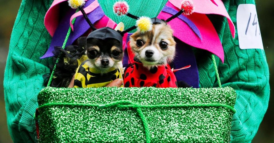 23.out.2016 - Cachorros fantasiados são levados para desfile de halloween em Manhattan, em Nova York (EUA)
