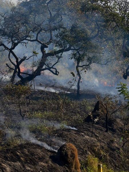 Vista de queimada em área de cerrado em São José dos Campos (SP) - Lucas Lacaz Ruiz/Fotoarena/Folhapress