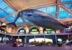 Reprodução/ Facebook Museu Americano de História Natural (@naturalhistory)