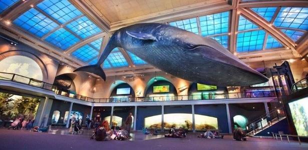 Réplica de baleia azul: cartão postal do Museu Americano de História Natural, em Nova York