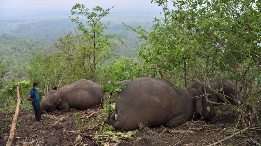 Elefantes foram encontrados mortos em uma encosta na selva do estado de Assam, na Índia - Biju Boro/AFP