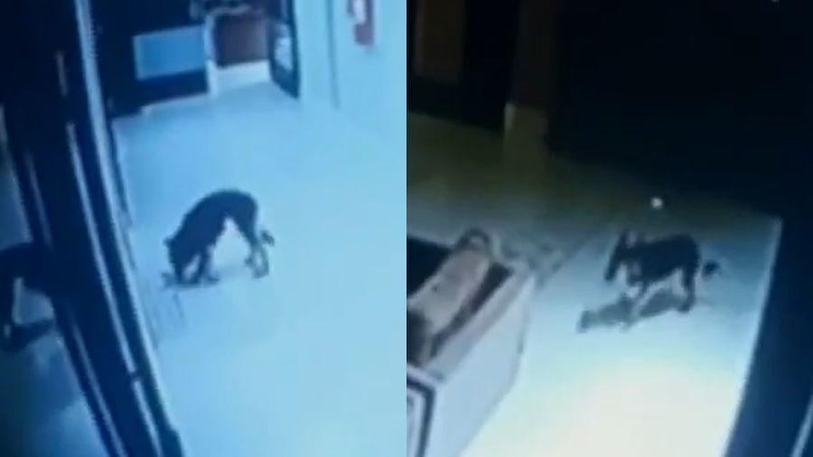 Cachorra usa elevador para passear em condomínio em Fortaleza - Reprodução/TV Verdes Mares