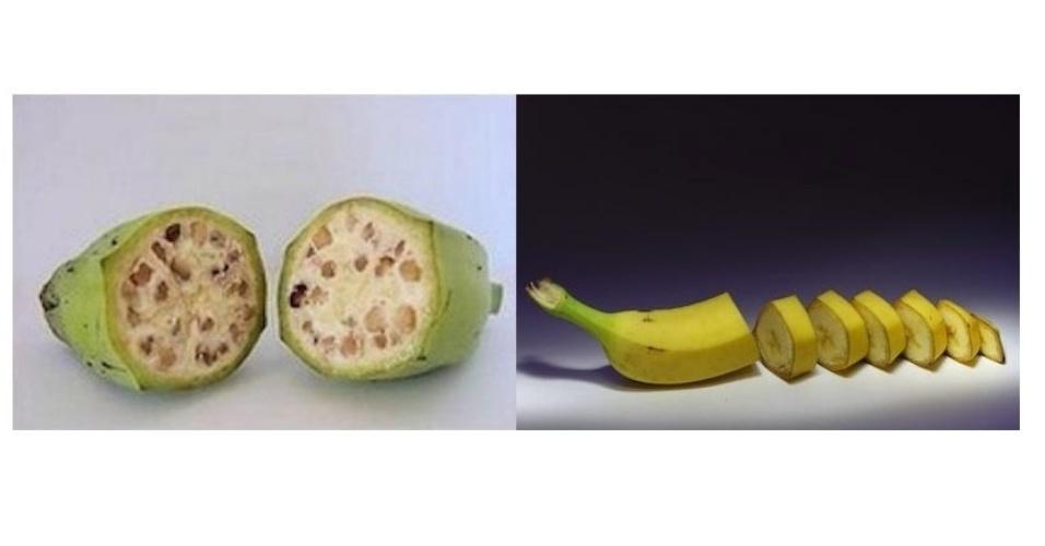 As primeiras bananas eram provavelmente como a que está na imagem da esquerda, feita pelo Genetic Literacy Project. À direita, imagem da banana de hoje