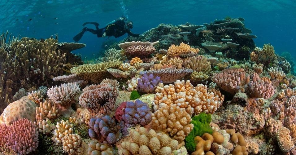 26.abr.2016 - Um mergulhador observa corais em Queensland, Austrália. A Grande Barreira de Corais também é lar de enguias, lagostas e camarões, entre outras espécies