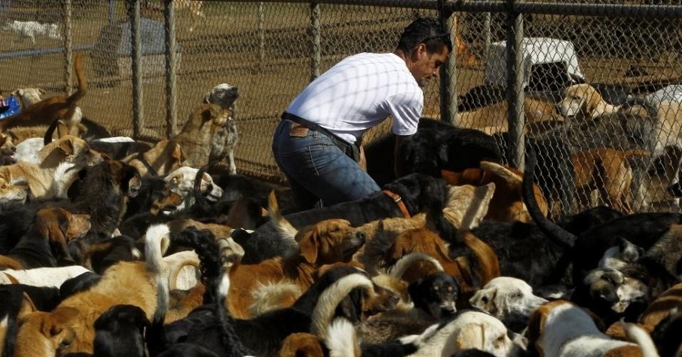 29.abr.2016 - Na hora de comer, todos os animais correm até o cuidador Alvaro Saumet, no território de Zaguates, um santuário para cachorros abandonados na Costa Rica. Com doações, o projeto garante os cuidados médicos e a alimentação dos mais de 750 cães que vivem no local