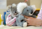 Ben Beade/ Zoológico da Austrália via AFP