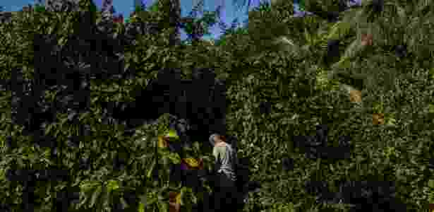 fazenda cuba alimentos nyt 3 - Mauricio Lima/The New York Times - Mauricio Lima/The New York Times