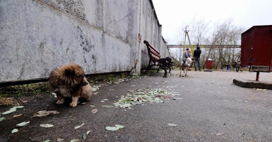 Cães que vivem em Chernobyl