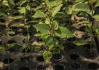Clonagem de plantas, um contra-ataque à extinção de cerca de 80 mil espécies - Rubens Chaves/Folhapress