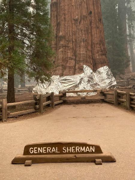 A General Sherman tem mais de 2,5 mil anos e seu tamanho foi certificado pelo Guinness em 2013 - Divulgação/Sequoia and Kings Canyon National Parks