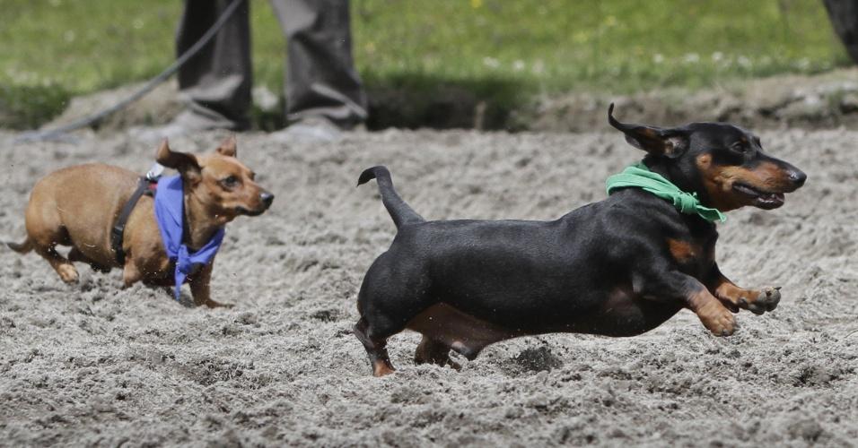 11.jul.2016 - Cachorros participam do Campeonato de Cães Salsicha no hipódromo de Hastings, em Vancouver, no Canadá. Mais de 60 cães competem na oitava edição do evento