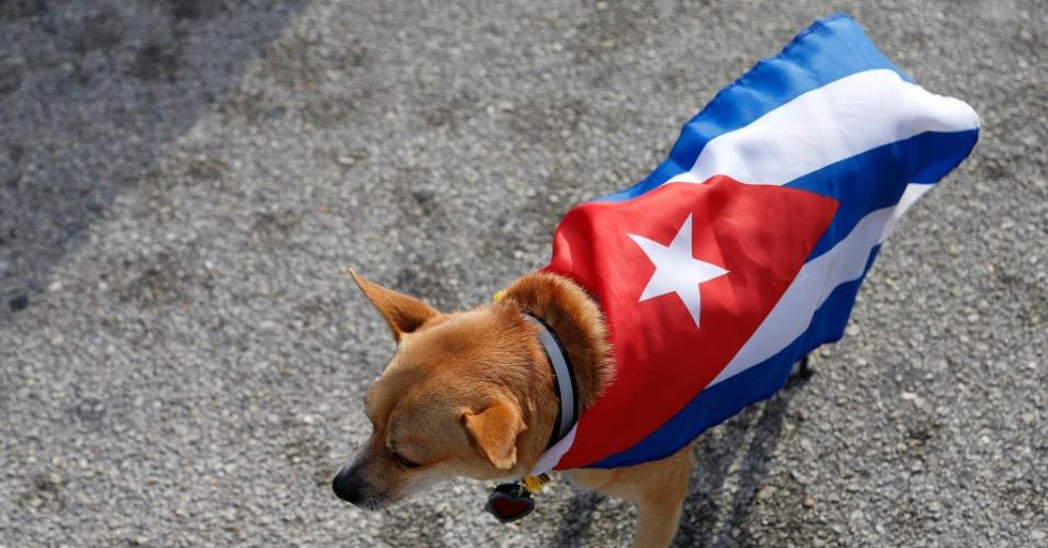 26.nov.2016 - Cachorro veste bandeira cubana enquanto cubano-americanos festejam a morte de Fidel Castro em Miami, na Flórida