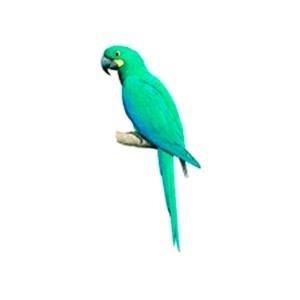 Reprodução/IUCN