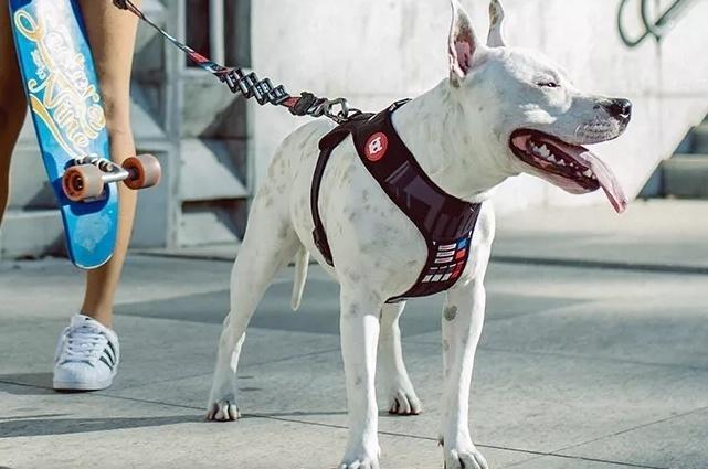 Zee.Dog peitoral para cachorro Mesh Plus Darth Vader