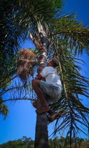 Charlivan Miranda Lopes, 20, sobe na palmeira para colher o fruto da bacaba. O consumo e manejo da floresta é uma das caracteristicas das comunidades que habitam a serra do Centro, em Tocantins