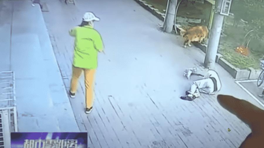 Gato caiu na cabeça de idoso na China e as imagens do acidente têm circulado nas redes sociais - Reprodução