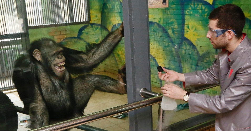 31.mar.2016 - Anfisa, uma chimpanzé de 11 anos, interage com um funcionário do Museu Interativo Newton Park, no zoológico em Krasnoyarsk, Rússia. As cenas serão exibidas em um canal de TV local