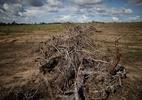 Desmatamento no Cerrado cai, mas ainda equivale a 4 cidades de SP, diz MMA (Foto: Ueslei Marcelino/Reuters)