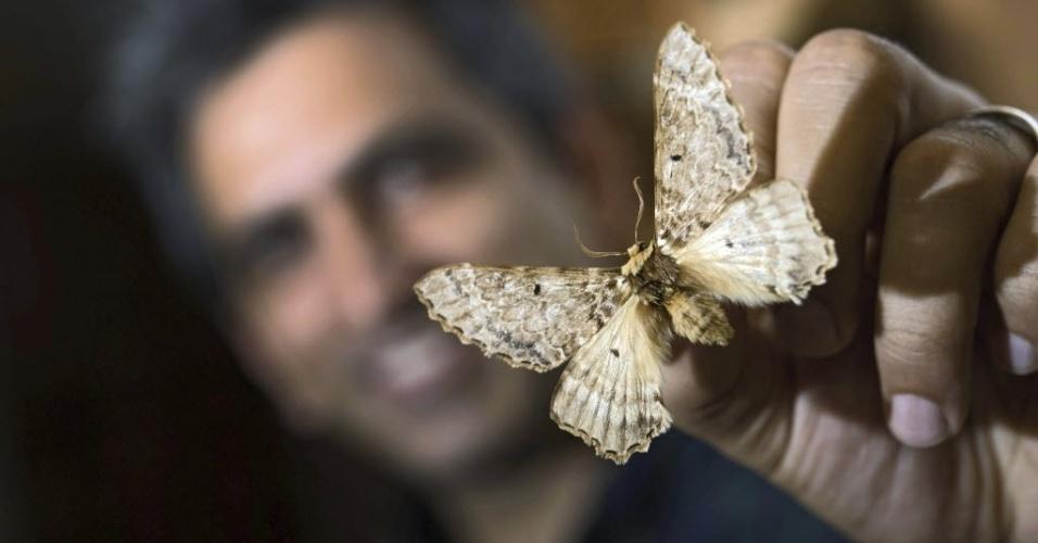 """16.jul.2015 - O entomologista Hossein Rajaei mostra exemplar da mariposa Pseudobiston pinratanai no museu Staatliches Museum für Naturkunde, em Stuttgart, na Alemanha. Mais de 25 anos depois do primeiro exemplar ser caçado, uma equipe internacional de pesquisadores descobriu uma nova família das grandes mariposas """"Pseudobistonidae"""""""