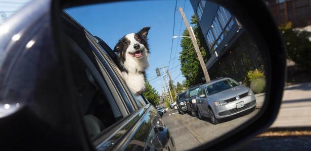 Bela, a cachorra de Lynn Gemmell, passeia de carro em Seattle