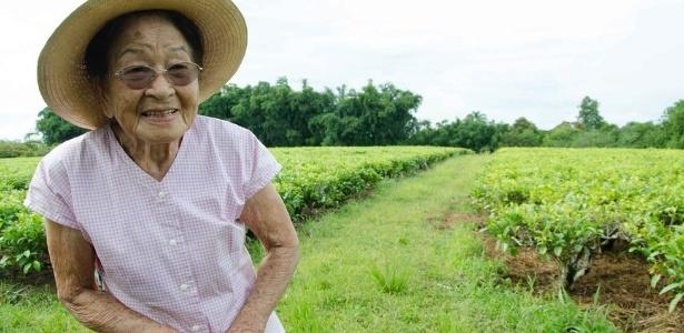 Chá preto é produzido há duas gerações na família de Elizabete Shimada