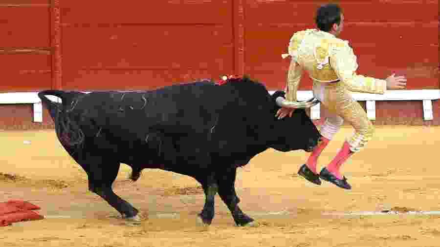 Toureiro Enrique Ponce é atingido por touro em evento na Espanha - CRISTINA QUICLER / AFP