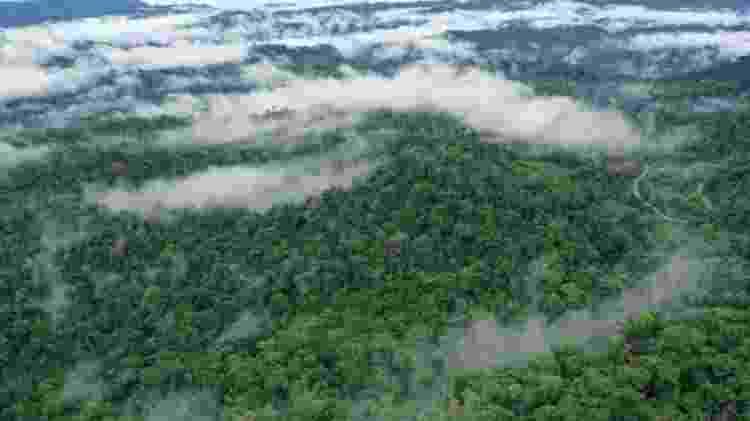 Florestas tropicais modernas são densas, com copas grossas, ao contrário do que existia no final do período Cretáceo - Getty Images - Getty Images