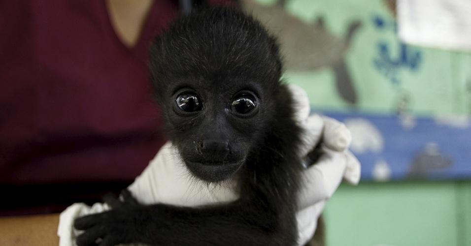 3.mar.2016 - Bebê macaco resgatado recebe cuidados de veterinária no Centro de Resgate Animal na Costa Rica, em Turrucares. A seca na região Norte do país tem matado e afetado animais selvagens