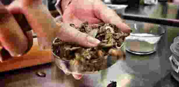 As baratas cinéreas, de origem africana e produzidas em laboratório, são próprias para consumo humano - Divulgação