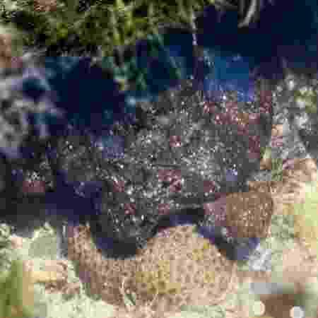 Coral 1 - Ricardo J. Miranda - Ricardo J. Miranda