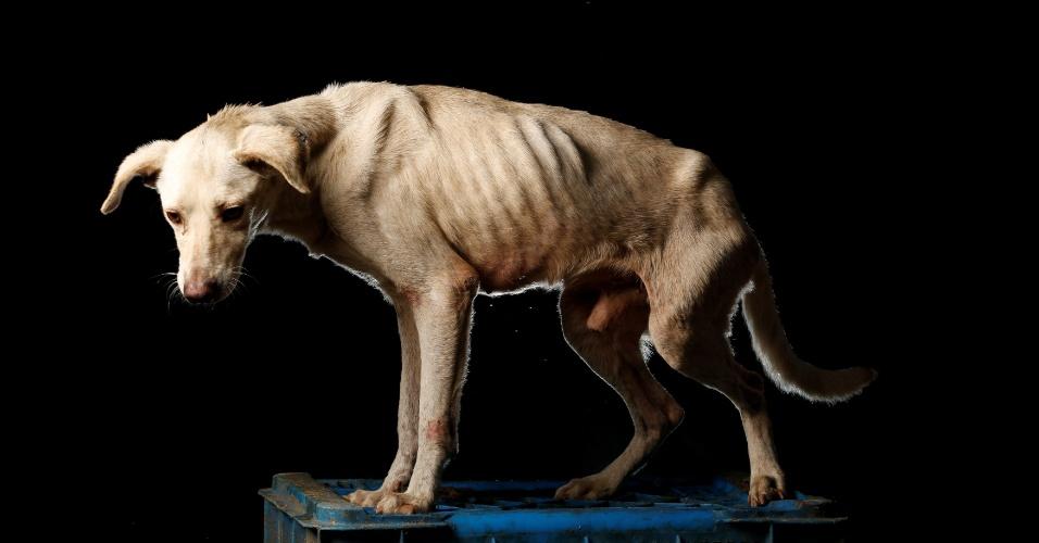 """ÁLVARO - """"Ele foi trazido para o abrigo por um vizinho chamado Álvaro que o viu ser atropelado. Ele estava muito mal e quase morreu, mas em vez de sacrificá-lo, decidimos dar alguns dias para ver se ele se recuperaria"""", disse Maria Silva, que cuida dos cachorros no abrigo Famproa, em Los Teques, na Venezuela"""