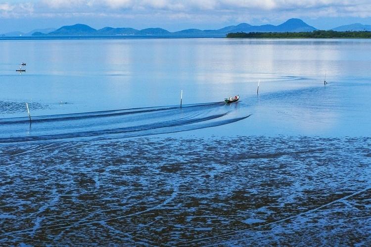 Parque Nacional do Superagui (PR) - No litoral norte do Paraná, o Parque Nacional do Superagui é uma área reconhecida por sua importância natural antes mesmo da nomeação na Unesco como Patrimônio Mundial em 1999. No início da década de 70, antes mesmo de sua criação, em 1989, a região do parque havia sido decretada patrimônio paisagístico do Estado paranaense. Com quase 34 mil hectares de extensão, o parque protege espécies como o mico-leão-da-cara-preta, endêmico da Mata Atlântica e criticamente ameaçado de extinção