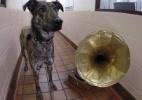 BBC/ SPCA Escocesa