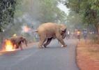 A chocante foto de elefantes em chamas premiada em concurso - Biplab Hazra/Sanctuary Wildlife Photography Awards