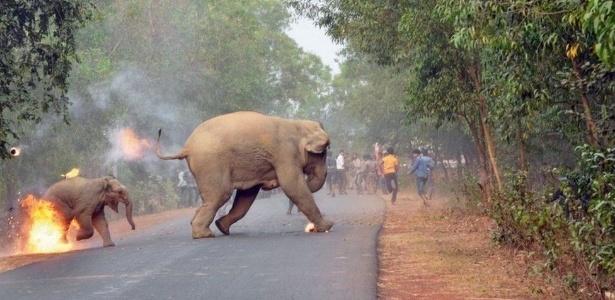 Conflitos entre elefantes e humanos são frequentes no Estado de Bengala Ocidental, onde foto premiada foi tirada