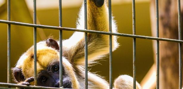 Macaco em zoo