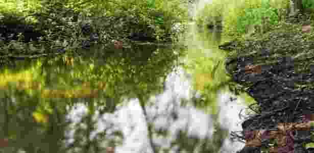 Código Florestal 3 - Getty Images - Getty Images
