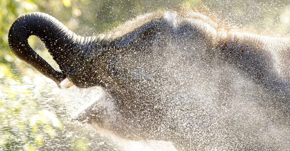 14.set.2016 - Elefante toma uma ducha de água durante dia quente na Blijdorp Zoo em Roterdão (Holanda)