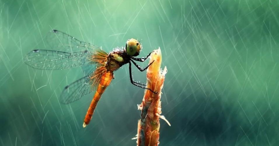 É possível quase sentir as gotas de chuva nesse close da libélula