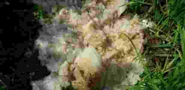 Objeto, que pesa de 10 a 12 kg, caiu do céu e intriga autoridades da Índia - Divulgação