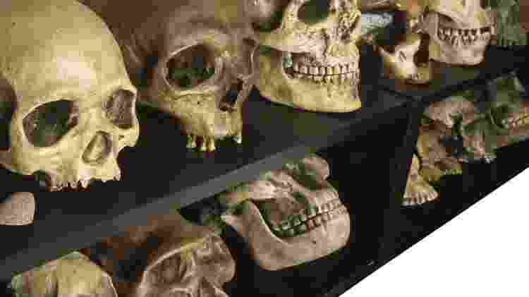 Qual foi o primeiro hominídeo a falar? - Getty Images - Getty Images