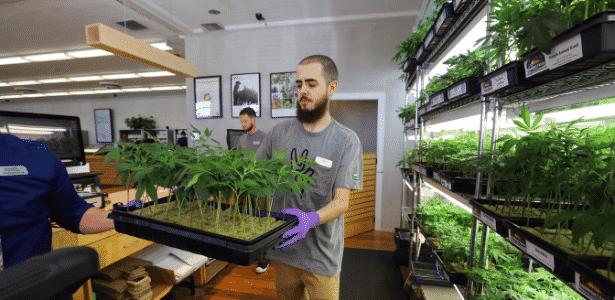"""Ian Almerico leva caixa com """"cannabis"""" em empresa que trabalha com maconha medicinal, na Califórnia - Jim Wilson/The New York Times - Jim Wilson/The New York Times"""