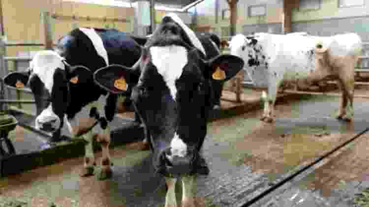 Europeus criticam uso de hormônios de crescimento pelo setor de carnes brasileiro - AFP - AFP