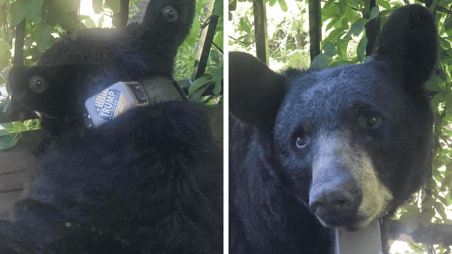 """Urso preto é visto na Carolina do Norte (EUA) com adesivo """"Trump 2020"""" em coleira de monitoramento - Reprodução/Facebook/Help Asheville Bears"""