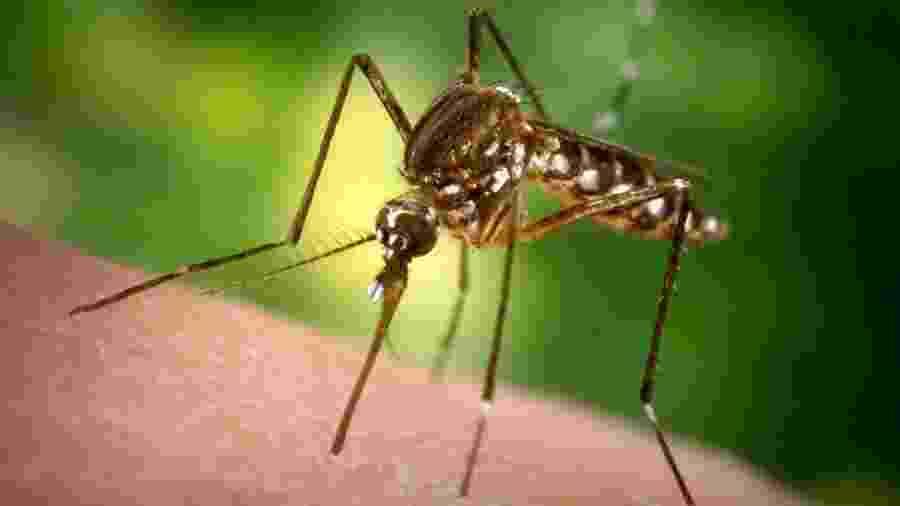 Objetivo da medida é reduzir a população do mosquito Aedes aegypti - Getty Images